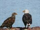 Eagle and Eaglet, Helliwell Park, Hornby Island, B.C.
