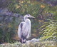 Heron at Beacon Hill Park