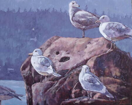 Seagulls at Shinglespit, Hornby Island