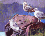 Study for Seagulls on a Rock, Hornby Island
